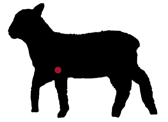 locatie: Zuiglamsschouder rollade, van de Zeeuwse eilanden