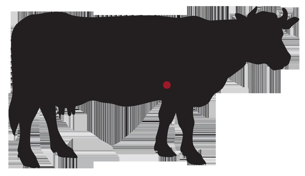 locatie: Schouder biefstuk