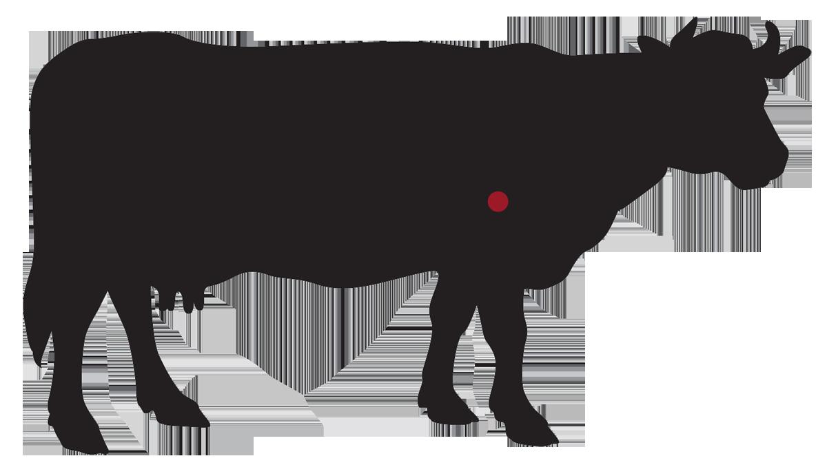 locatie: Sukade steak