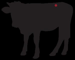 locatie: T- Bone steak