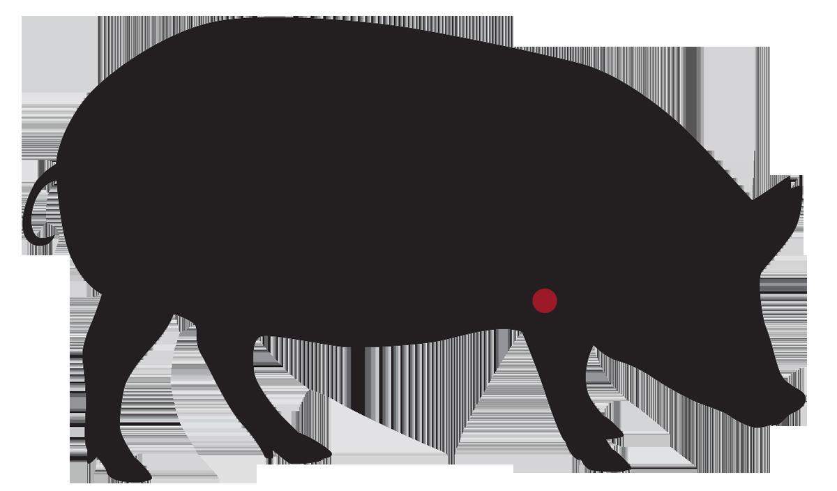 locatie: Varkensschouder met of zonder been